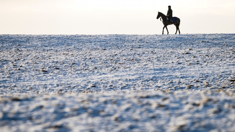 A lone horse and rider survey the scene after snow arrives on the Curragh