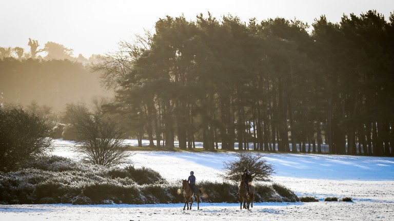 A pair of horses stretch their legs on the Curragh following a covering of snow