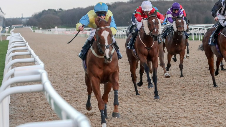 Foolaad (left): completed a Southwell hat-trick but seen here in action at Newcastle