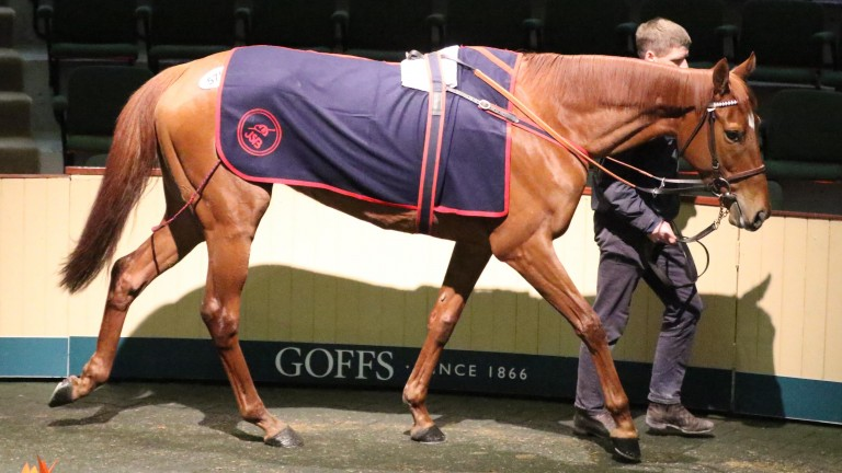Glamorous Approach: the €280,000 sale-topper going through the Goffs sales ring on Thursday