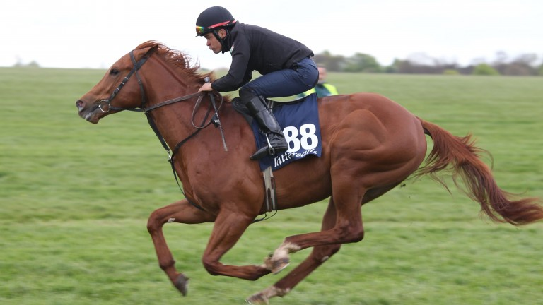 Commander Han breezing before the Tattersalls Craven Sale