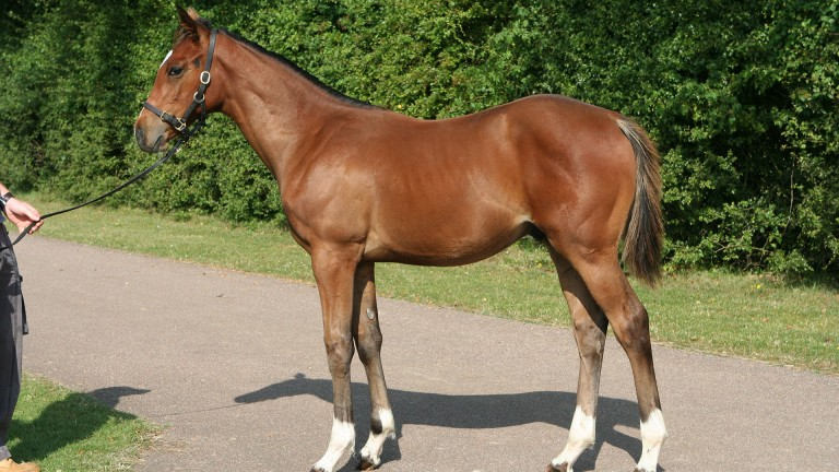 Frankel was born in box 5 at Banstead Manor Stud and then spent three months grazing at Coolmore