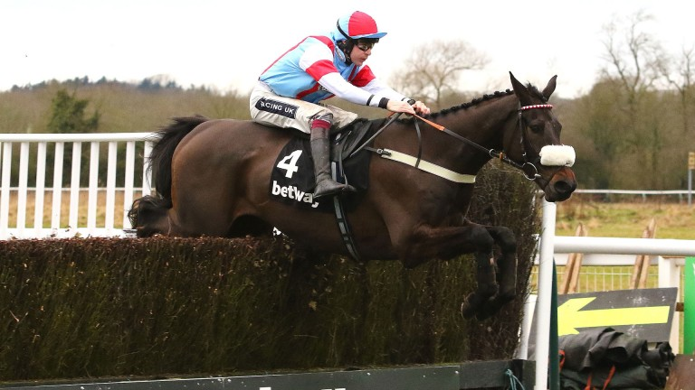 Saint Calvados: a potential English challenger this weekend for Harry Whittington