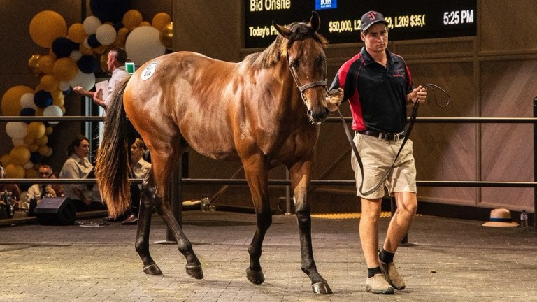 The I Am Invincible colt sold to Sun Bloodstock for A$400,000