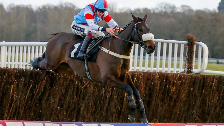 Kingmaker Novices' Chase winner Saint Calvados shows his foot-perfect jumping