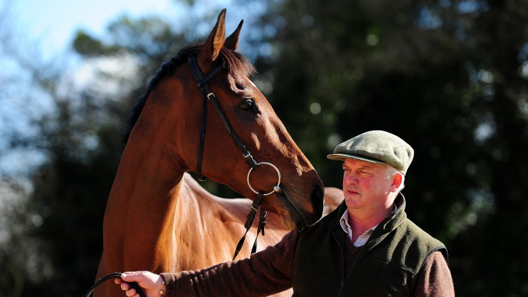 "Cue Card: ""He schooled really well last week and looks a million dollars"" said trainer Colin Tizzard"