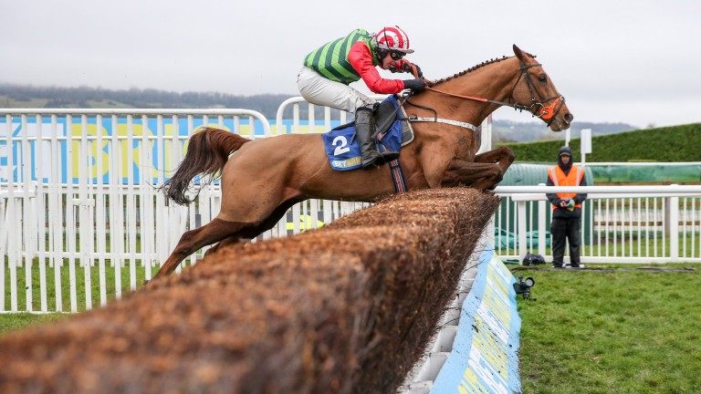 Definitly Red: Brian Ellison star a 16-1 chance to win the Gold Cup for the north