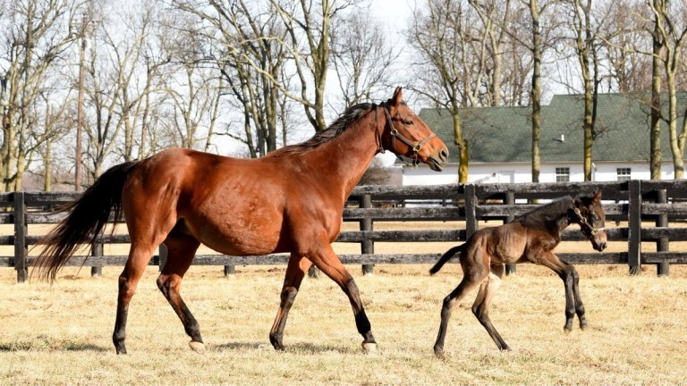 Beholder and her first foal, a colt by Uncle Mo, in their paddock