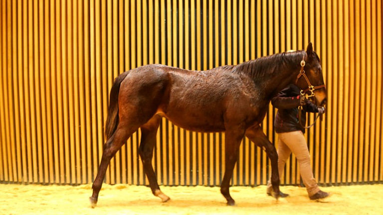 Wootton's Colt: one of three lots to make €37,000 at Arqana on Tuesday
