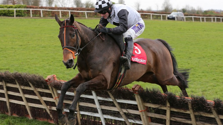 Dunguib: sent off the 4-5 favourite for the Supreme Novices' Hurdle but finished only third