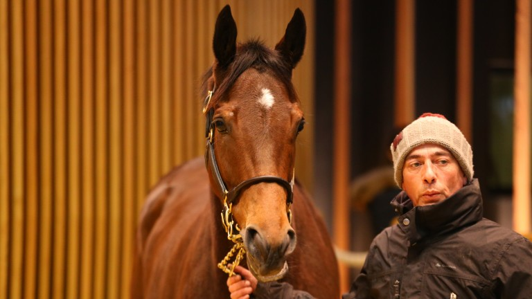 Lbretha: daughter of Exceed And Excel was the second most expensive lot at €260,000