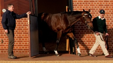 Simon Mockridge opens the door as Frankel is led out of his box by his groom Rob Bowley at Banstead Manor StudSaxon Street, 22.11.12 Pic: Edward Whitaker