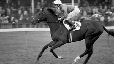Storm Bird: failed to live up to his potential on course, but more than made up for it at stud
