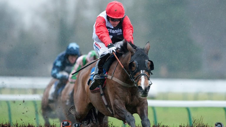 Celestial Halo: another high-profile horse for owner Andy Stewart