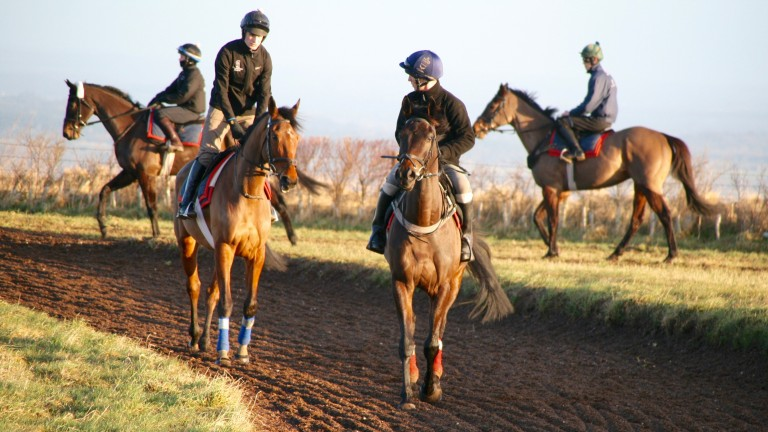 Bigmartre and Saint Calvados on the round gallop at Harry Whittington's yard