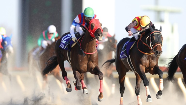 Nonkono Yume (left) runs down Ryan Moore-ridden favourite Gold Dream to win the February Stakes, the main Japanese prep race for the Dubai World Cup