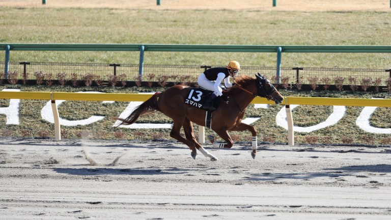 Kentucky calling: Sumahama well clear in the Hyacinth Stakes, the final leg of the 'Japan Road to the Kentucky Derby' series