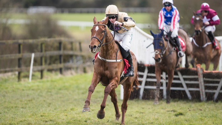 Meri Devie: has a big handicap in her according to trainer Willie Mullins