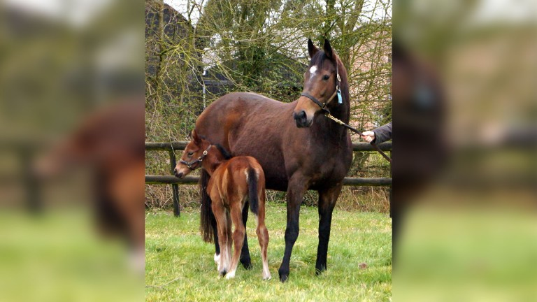 Nash Nasha with Just The Judge as a foal