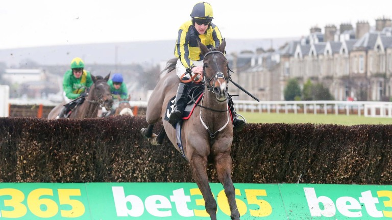 Cheltenham Festival hopeful Barney Dwan wins at Musselburgh