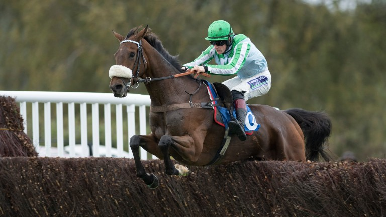 Braqueur D'Or: has a good chance in the Kim Muir