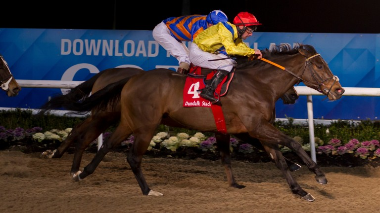 Red Avenger: looks to to notch his fourth win at Dundalk