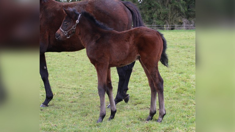 The Thistlestar filly bred by Vincent Kelly