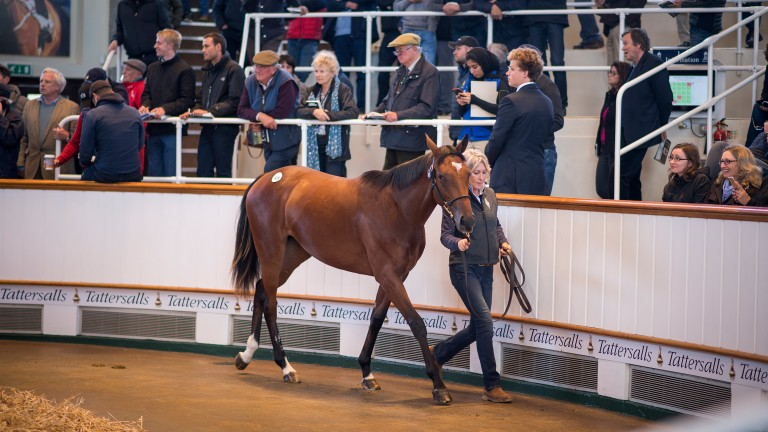 Gloam was knocked down to John Gosden for 4 million guineas at Tattersalls