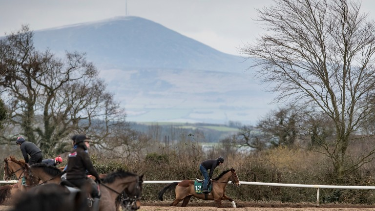 Faugheen stretches his legs at Willie Mullins' yard: news that he was injured leaked out