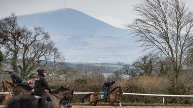 Faugheen stretches his legs at Willie Mullins' yard