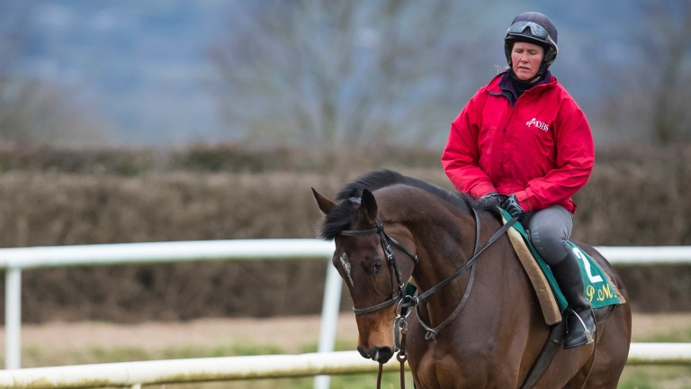 Douvan: on his way to Cheltenham?