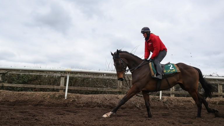 Douvan: majestic chaser could well run in the Champion Chase at Cheltenham