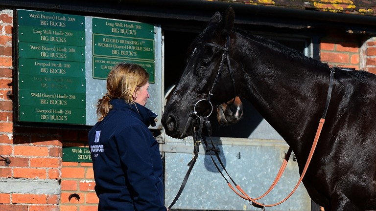 The photogenic Black Corton on display at Paul Nicholls' media morning