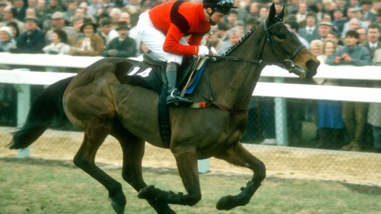 Jonjo O'Neill and Dawn Run: Cheltenham legends