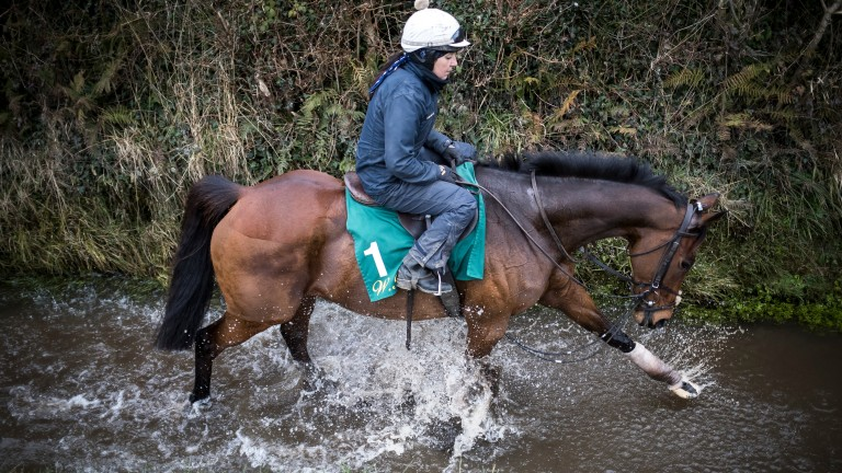 Un De Sceaux (Virginie Bascop) in the stream at Closutton: Ben Keith wants to keep the Ryanair Chase favourite on side