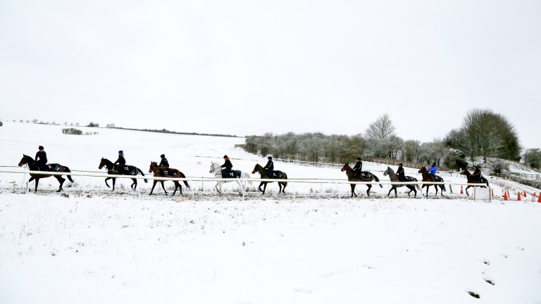 Brian Ellison's string are not put off by the Beast from the East as they exercise in the Malton gallops on Tuesday