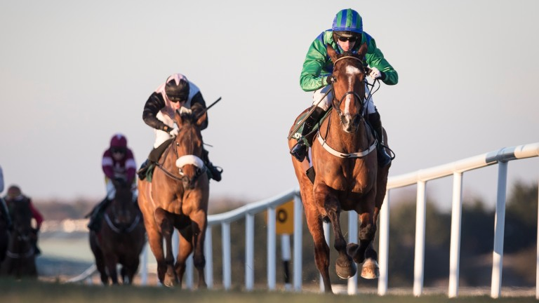 Carefully Selected (right): placed in 2018 champion bumpers at Cheltenham and Punchestown