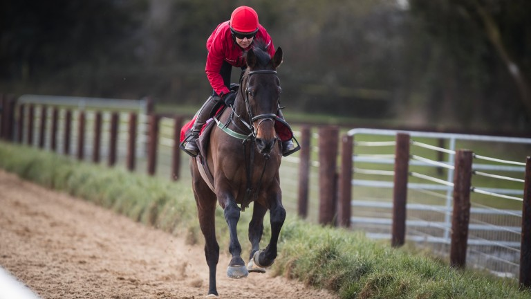Our Duke: beat RSA Chase favourite Presenting Percy on his last start at Gowran