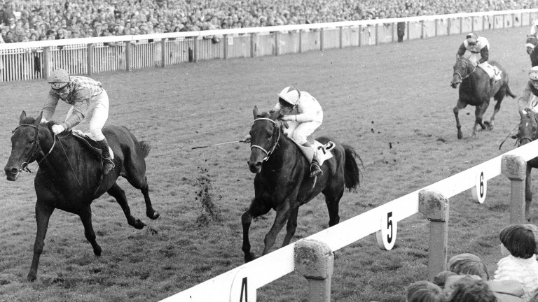 Sea Pigeon and Jonjo O'Neill (left) win the 1979 Ebor Handicap at York in a tight finish with Donegal Prince (Philip Robinson)