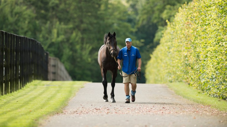The Racing Post statistics page features key data for sires, horses, trainers, jockeys and owners