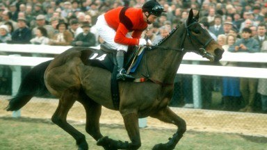 Dawn Run: Cheltenham legend