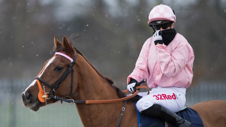 Braving conditions: Josephine Gordon attempts to keep warm aboard Steel Helmet prior to the opener at Wolverhampton