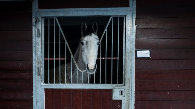 Looking out: a horse at Willie McCreery's stables glances out of its box