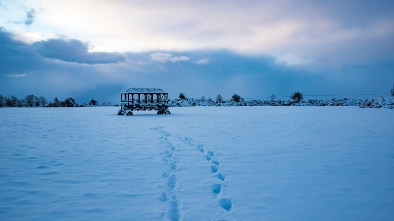 Heavy snowfall: all of the gallops on the training grounds at the Curragh were forced to be closed on Wednesday