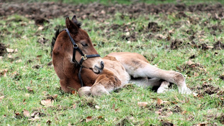 Highbank Stud's Muhaarar colt enjoying a break in the paddock