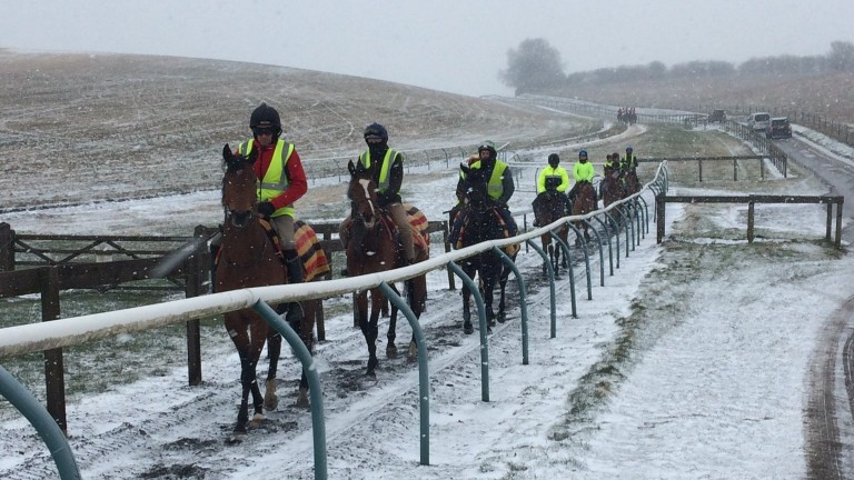 Harry Dunlop's string on the freezing Lambourn gallops