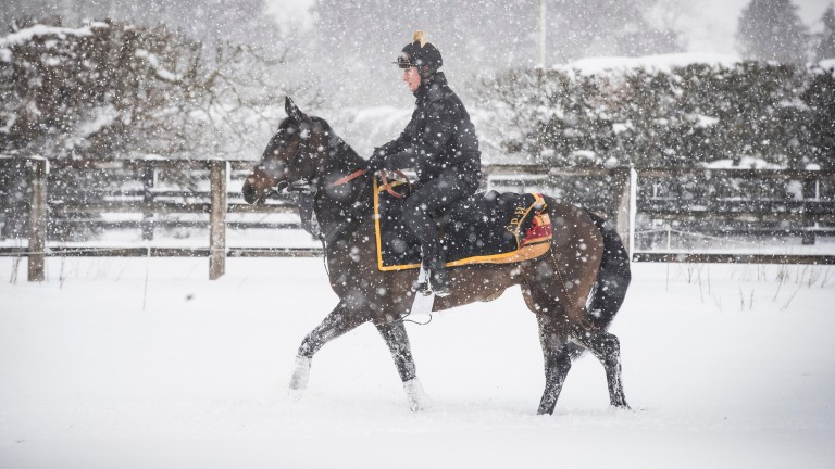 Heavy snow hits Eddie Harty's Mulgrave Lodge stables at Pollardstown on the Curragh