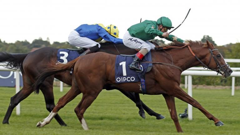 Pearling, the dam of Irish Champion Stakes hero Decorated Knight, will return to Galileo in 2018