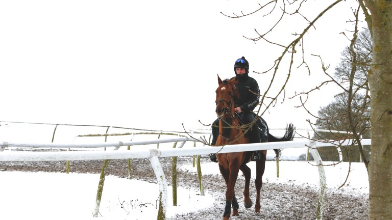 Definitly Red takes some exercise in the snow