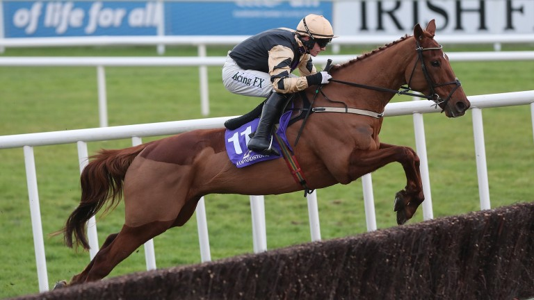 Yorkhill: looks set to contest the Unibet Champion Hurdle